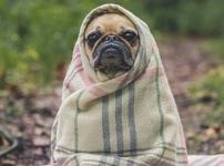 電気毛布おすすめと電気代やサイズ、洗濯、種類など疑問を解決